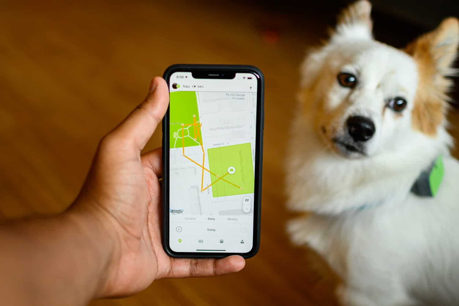 Best Dog GPS Trackers