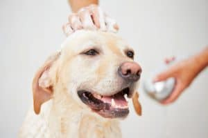 Dog Bath with Shampoo