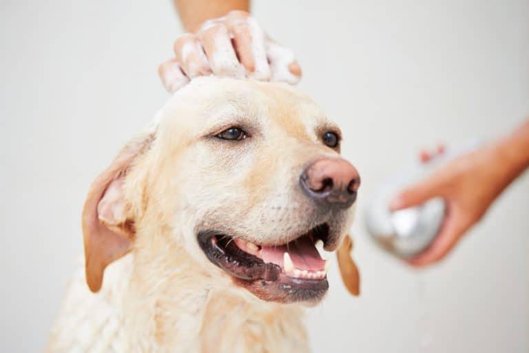 Dog Bath with Shampoo