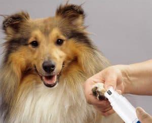 Dog Nail Grinding