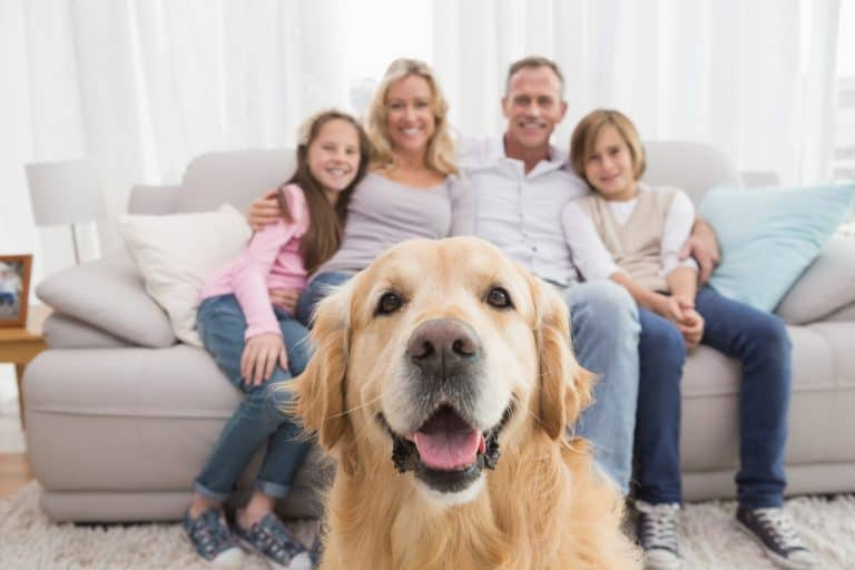 Dog for Kids and Families