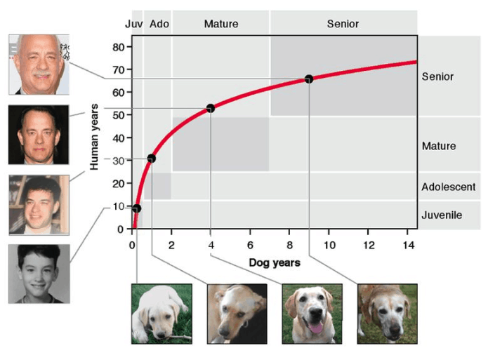 Human Years vs Dog Years