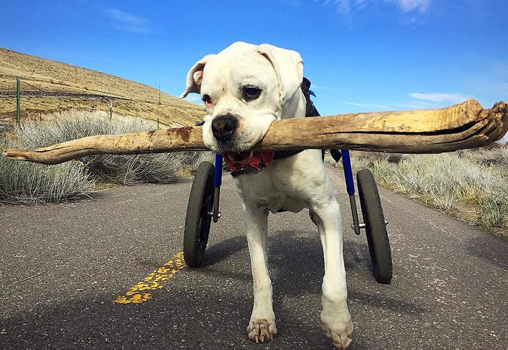 Best Dog Wheelchair
