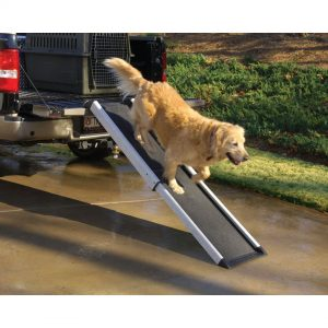 Dog using a ramp for SUV