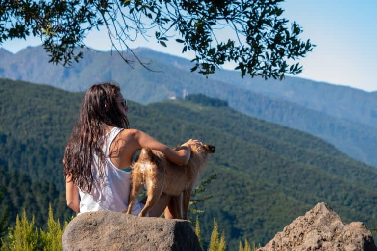 Best Small Hiking Dogs