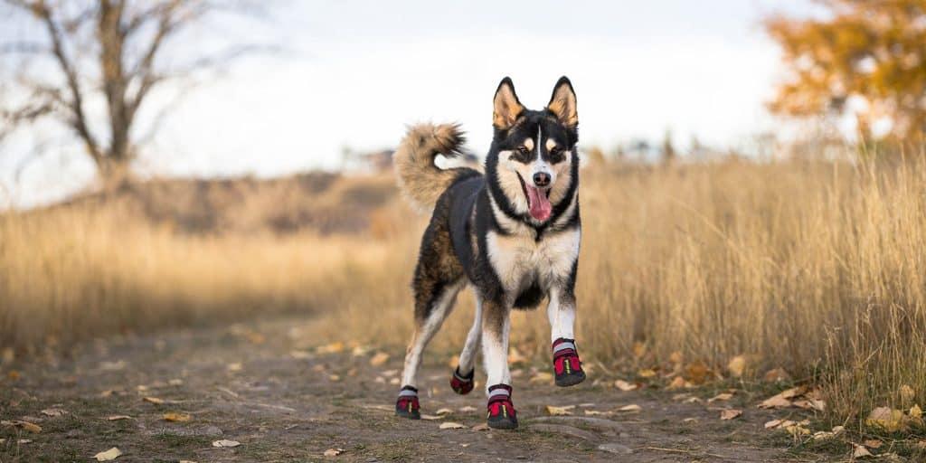 MyBusyDog Hiking Boots