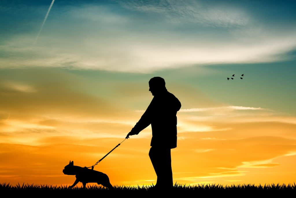 Spend Time Walking with Your Dog
