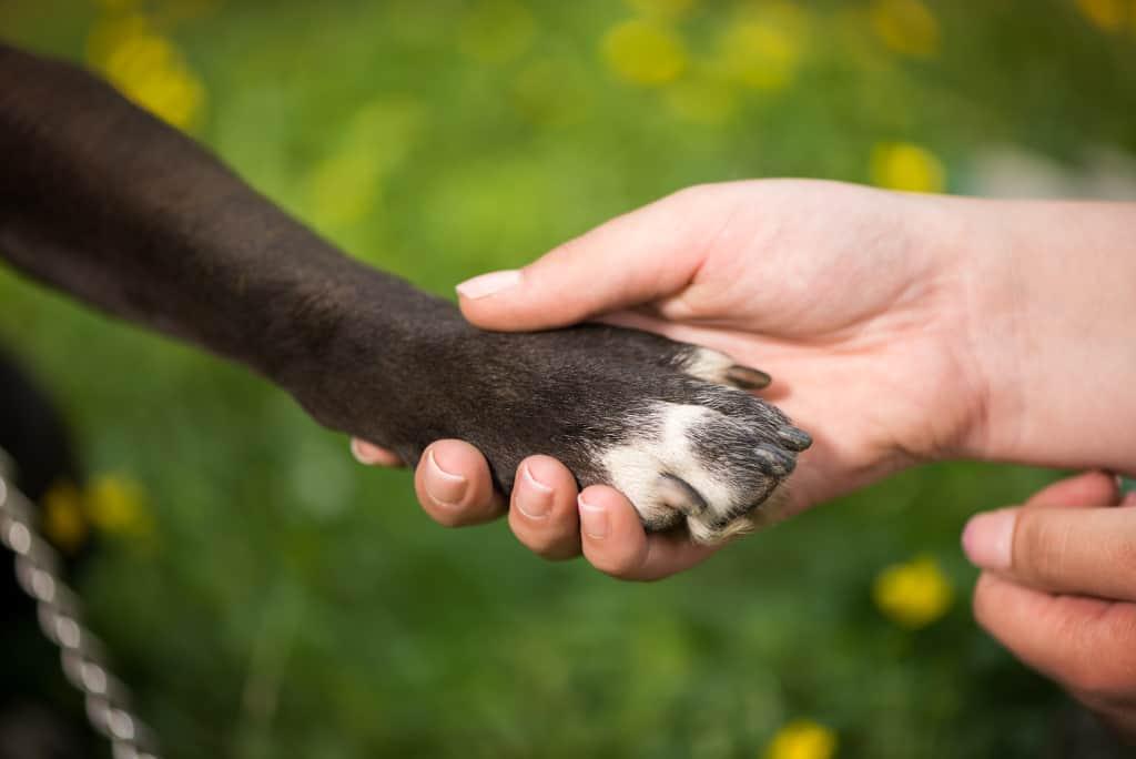 Clean Dog Paw