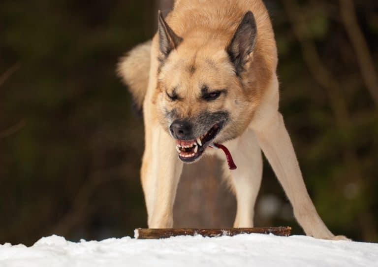 Dog Fear Aggression