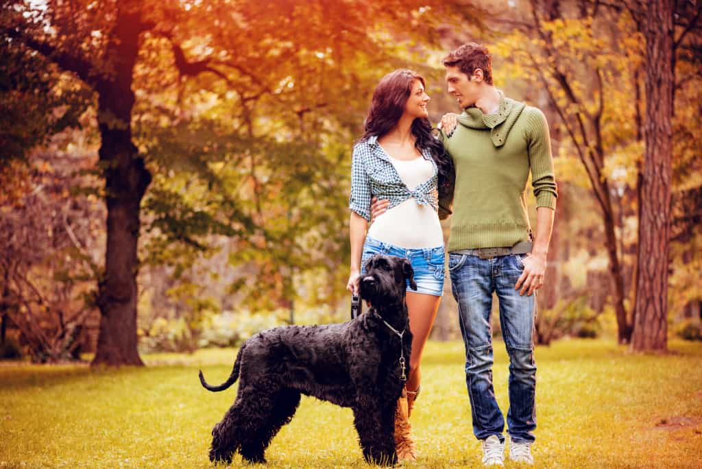 Giant Schnauzer with Young Couple