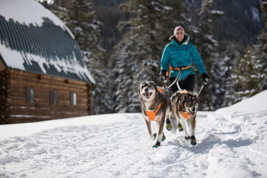 Skijoring with Dog