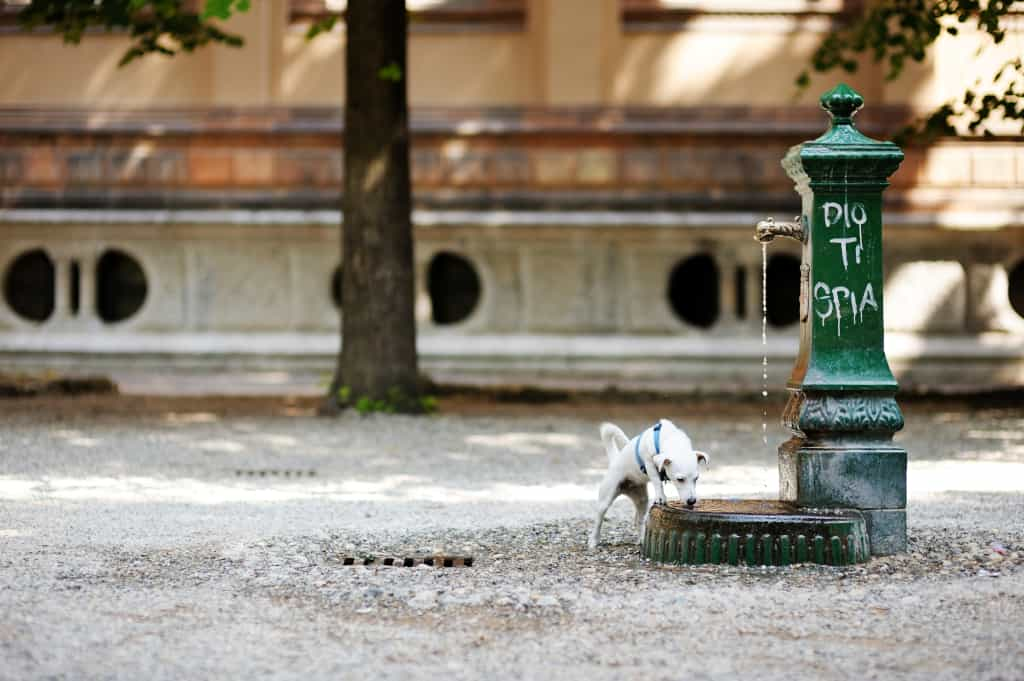 Dog Drinking from a Fountain