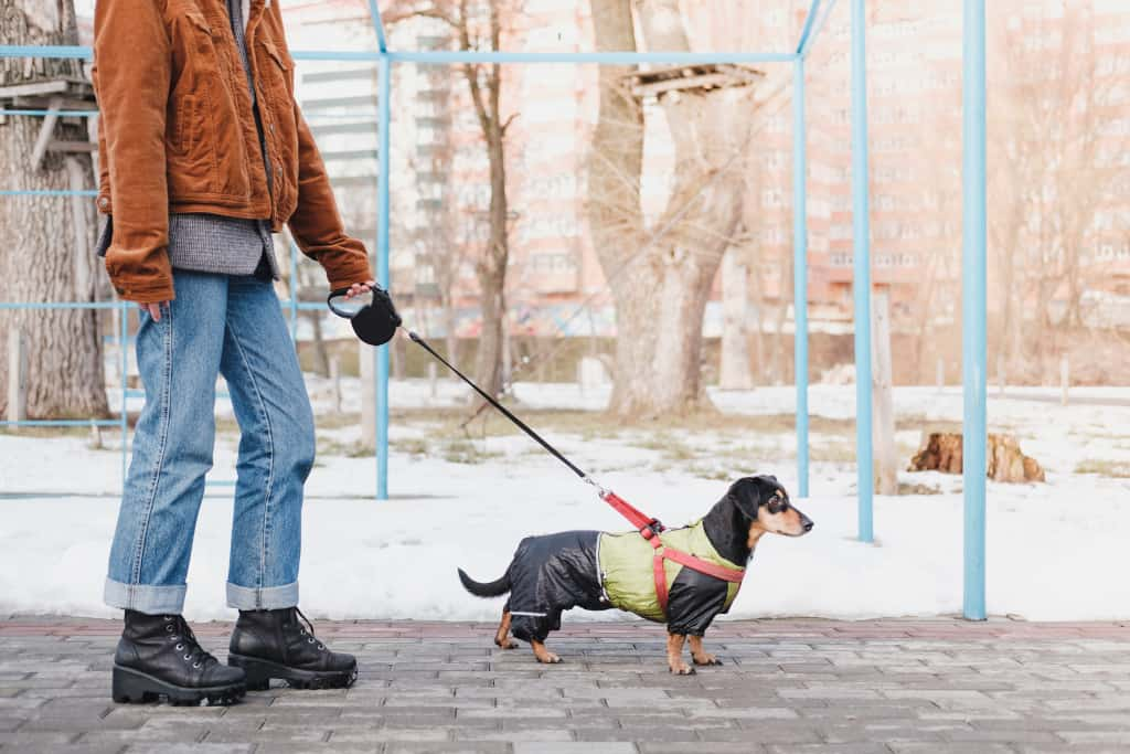 Dog Walking with Retractable Leash