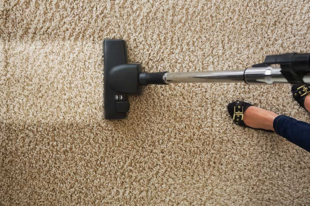 Vacuum Cleaning Flea Prevention