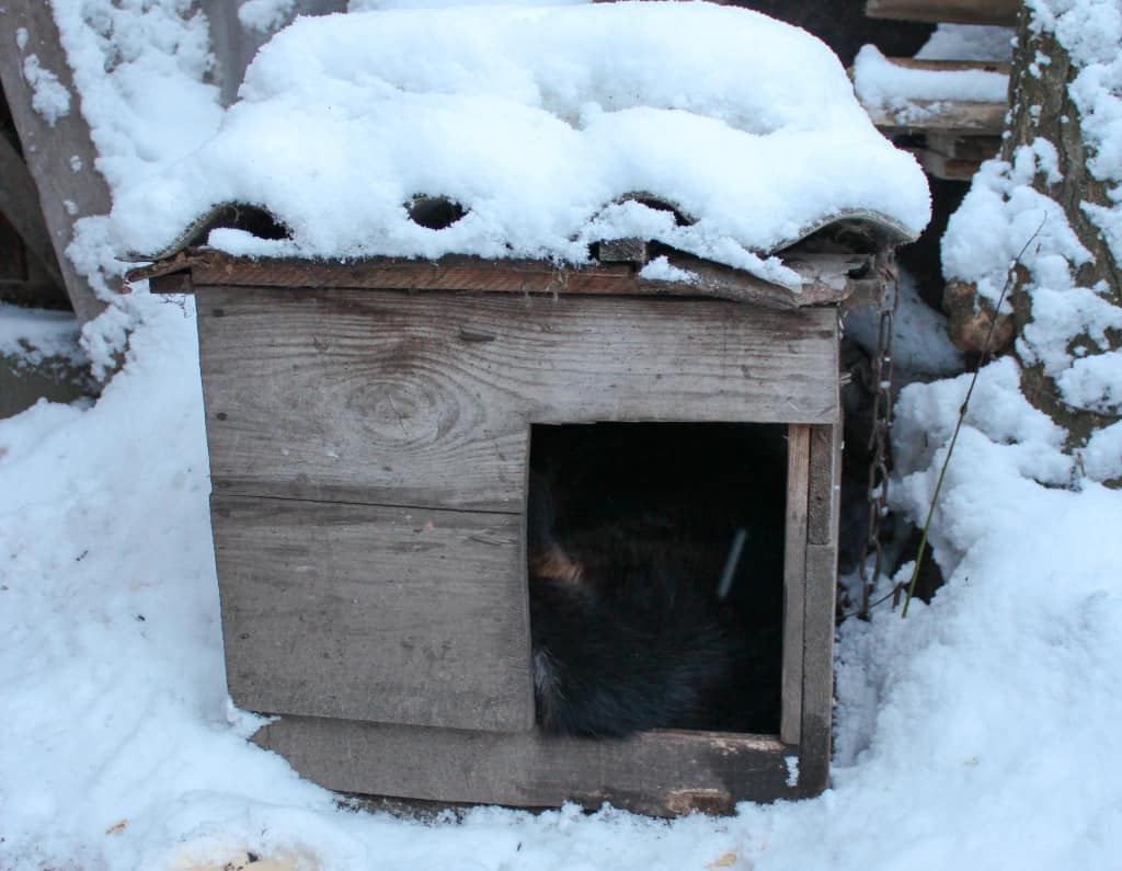 Best Dog House for Winter