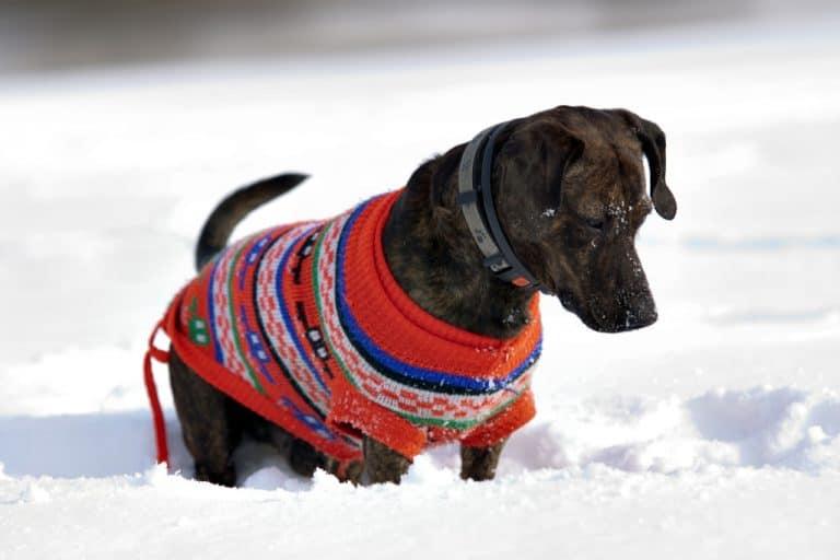 Best Dog Winter Coat