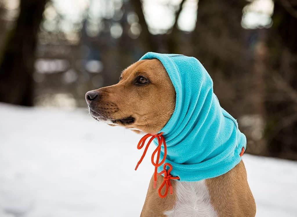 Best Dog Winter Hats