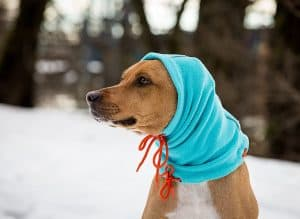 Best Dog Winter Hats