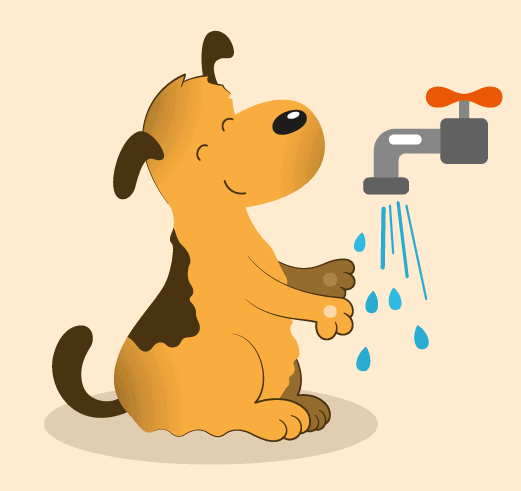 Clean Your Dog's Paws