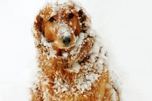 Dog at Snow