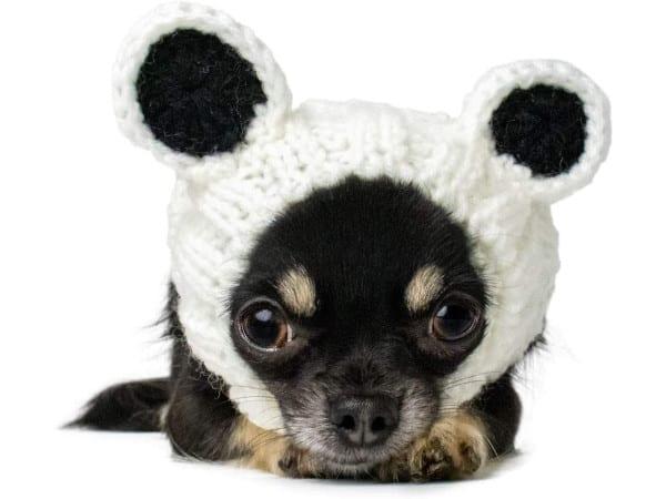 Zoo Snoods Panda Bear Dog Costume