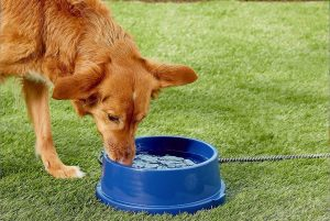 Best Heated Dog Water Bowl