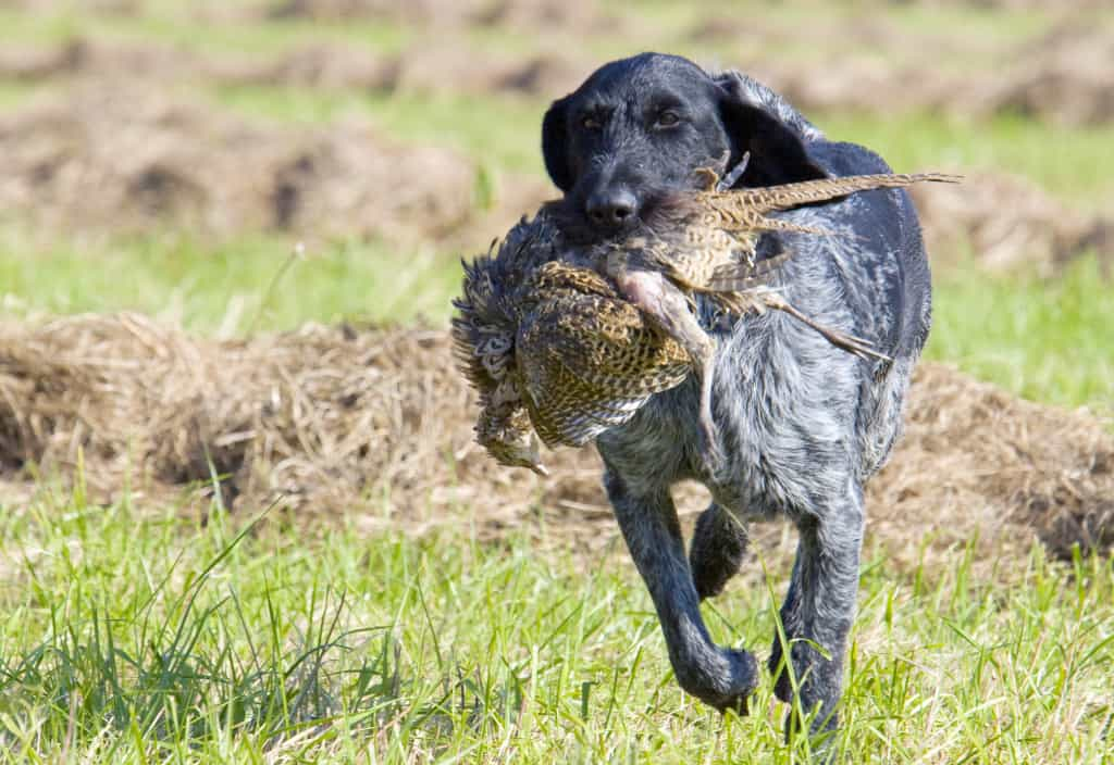 Best Hunting Dog Tracking Systems