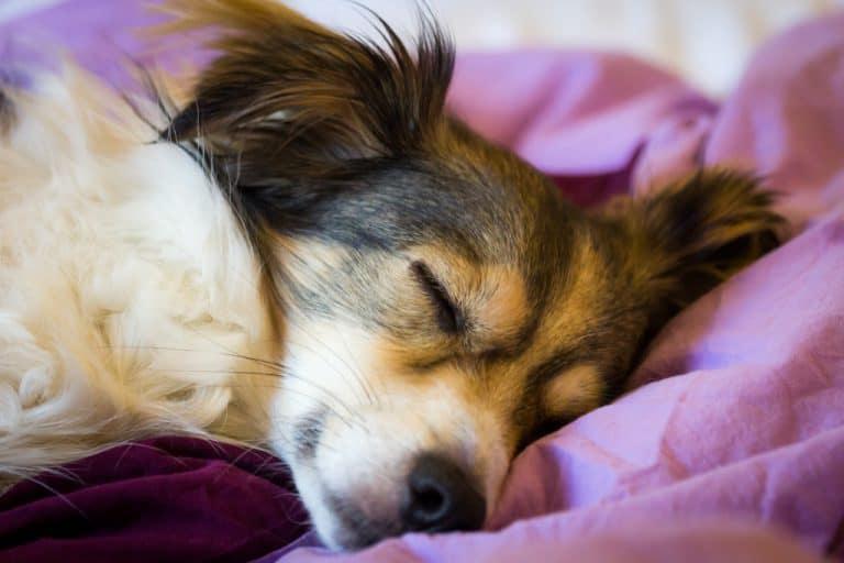 Dog Sleeping on Heated Dog Bed during Winter