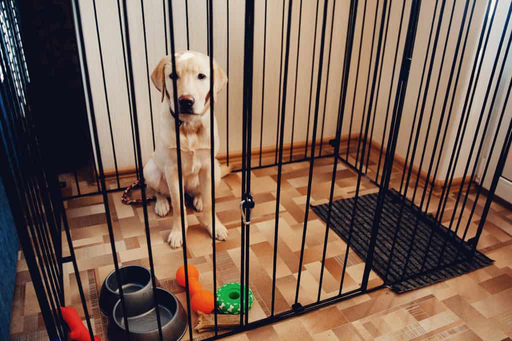 Dog-proof Your House