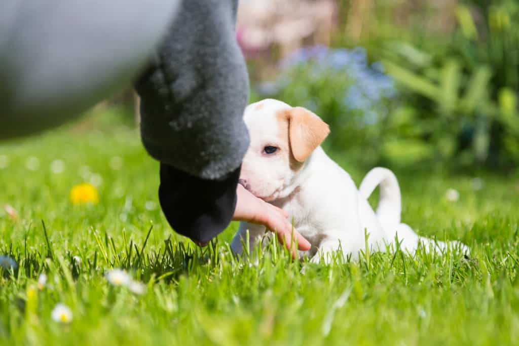 Teach Your Puppy to Leave It