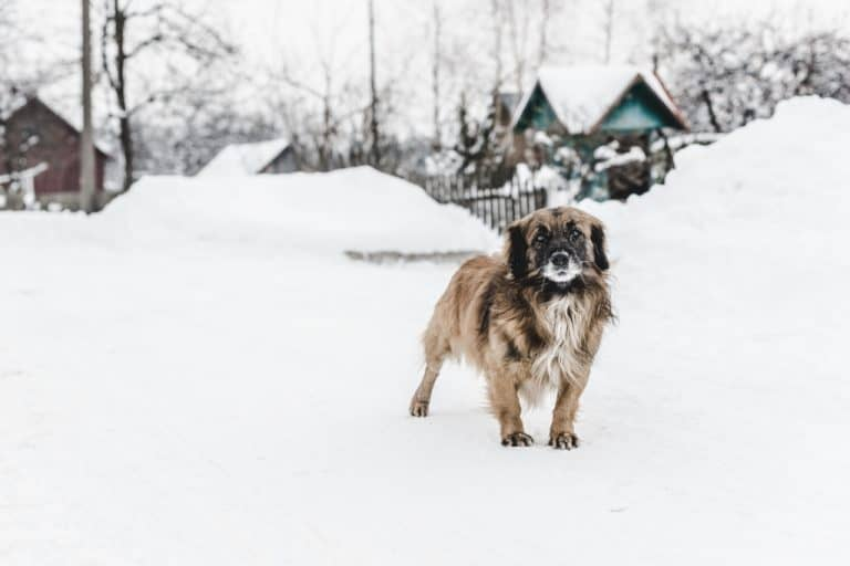 A dog in the winter