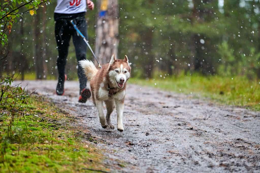 Canicross with a Dog