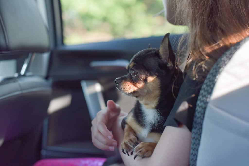 Cuddling a Car Sick Dog