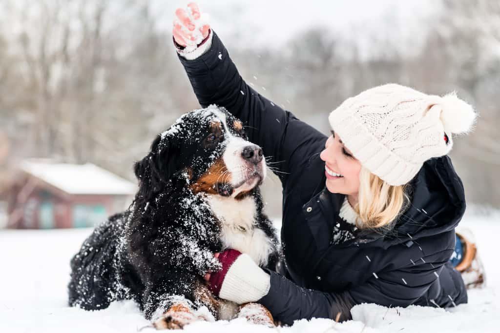 Dog Goes Outside in Winter
