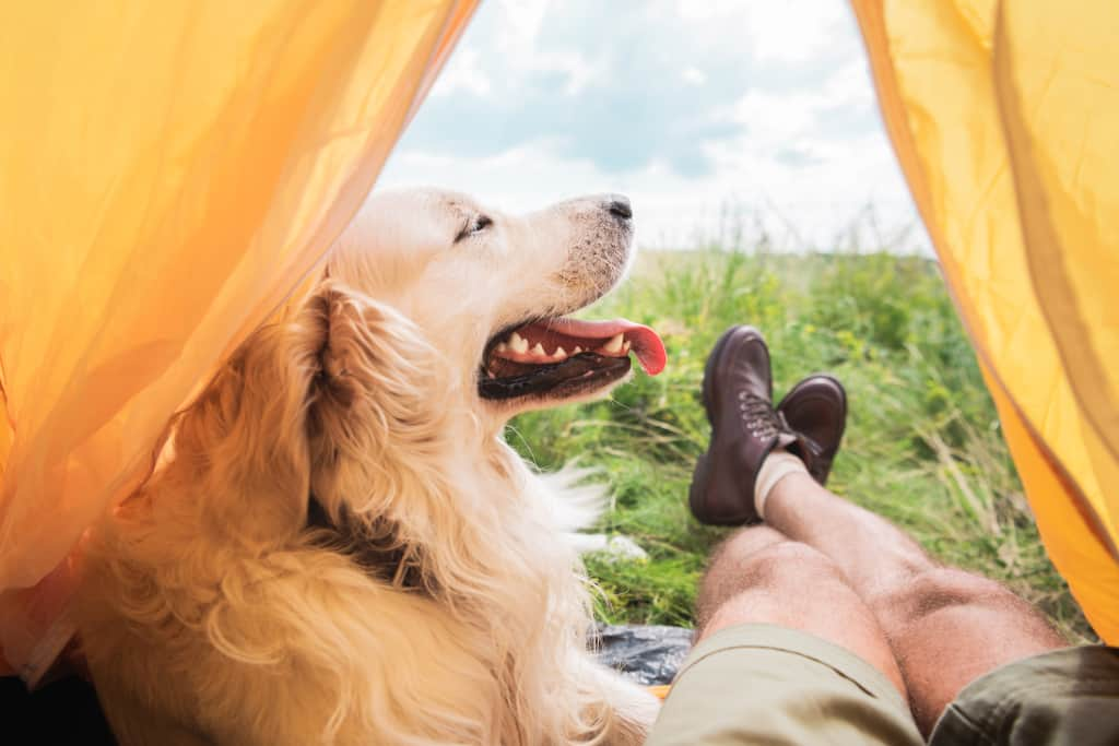 Outdoor-Activities-with-Dogs