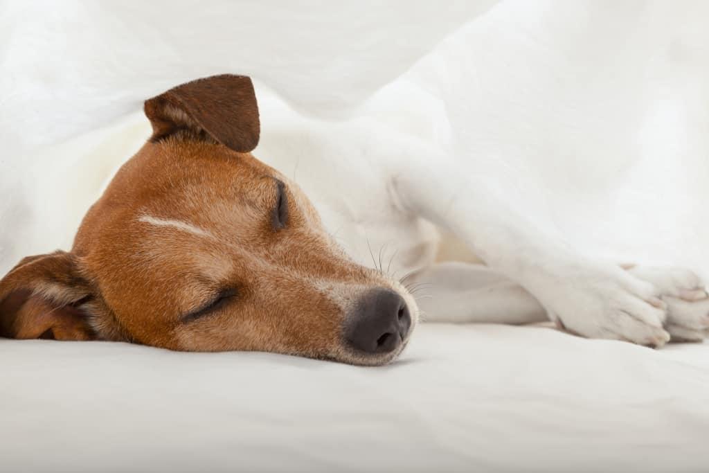 A Dog is Sleeping Well
