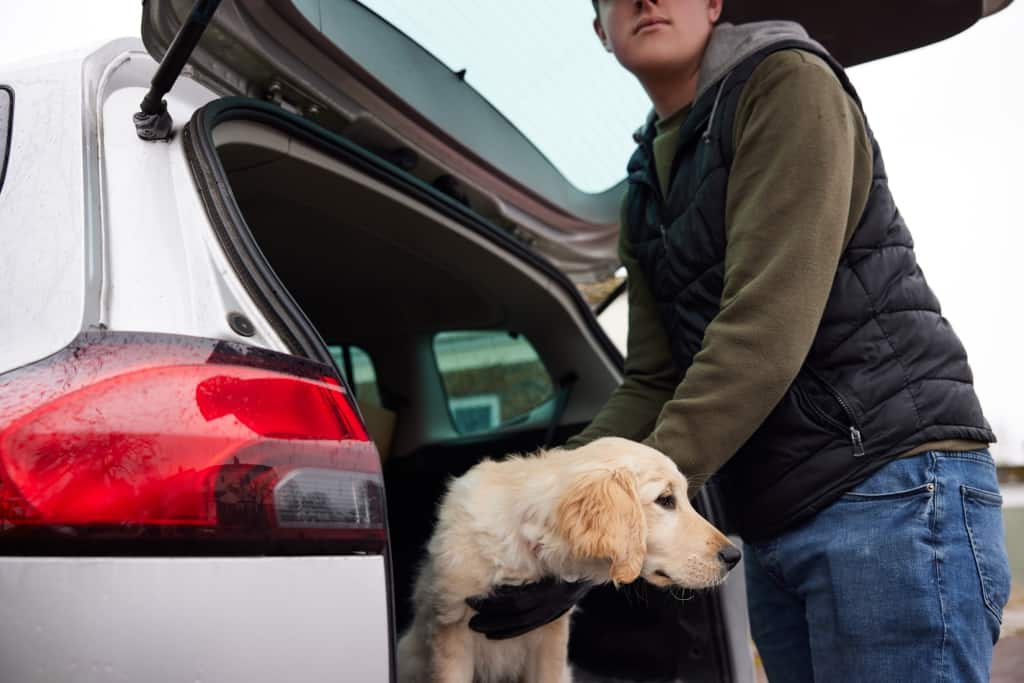 Treating a Motion Sickness of a Dog