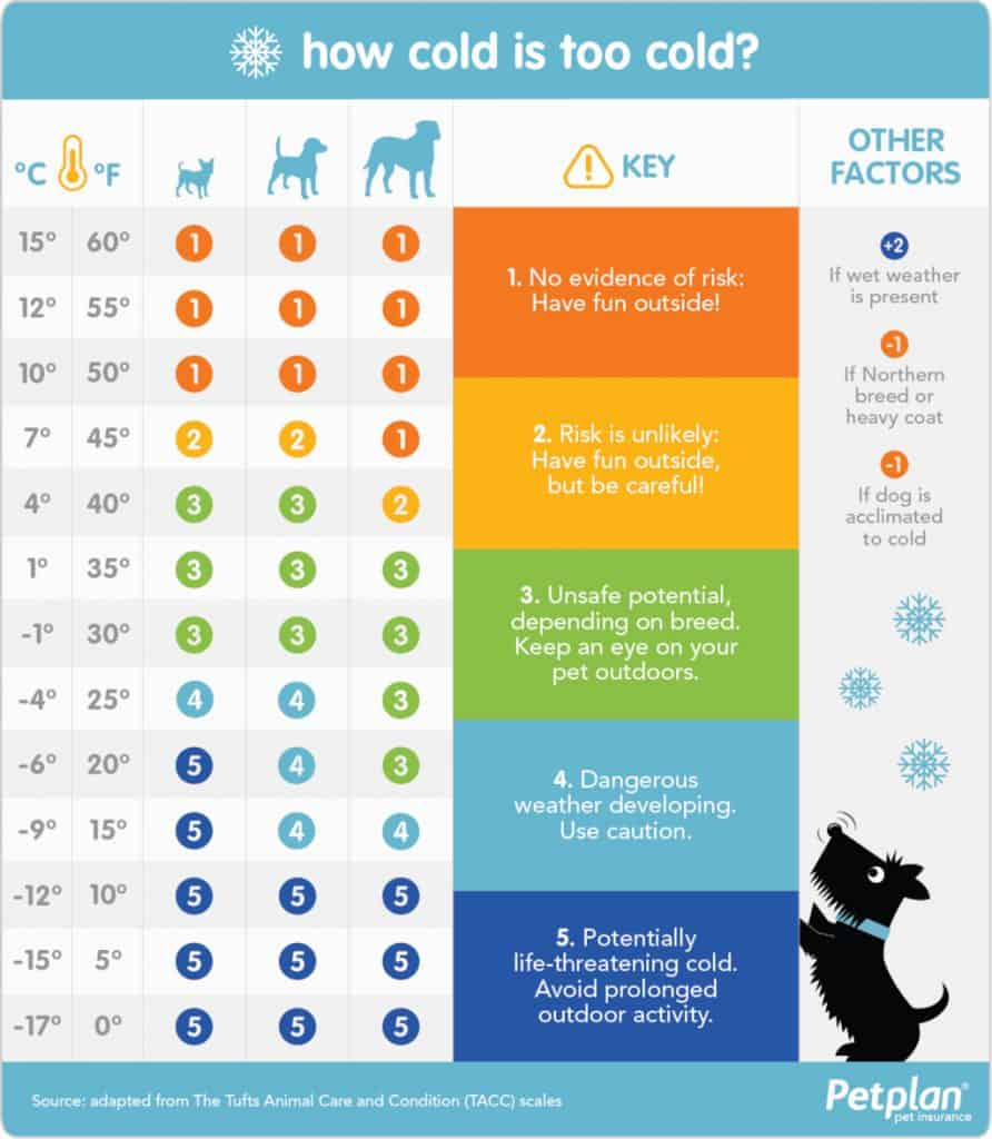 Cold Weather Safety Chart for Dogs
