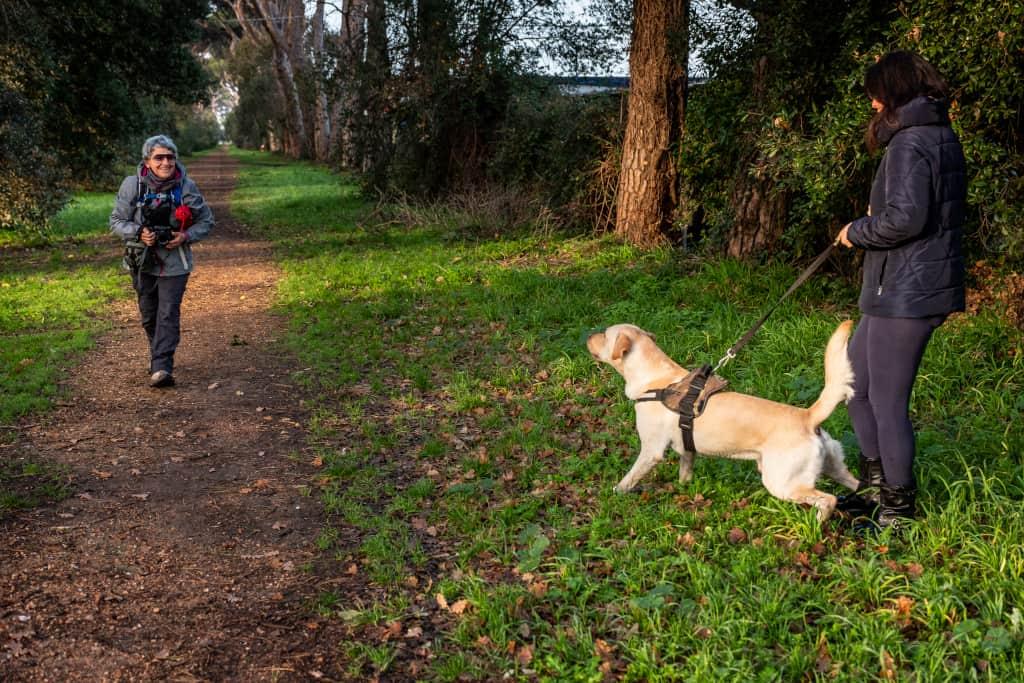 Control a Dog On-Leash