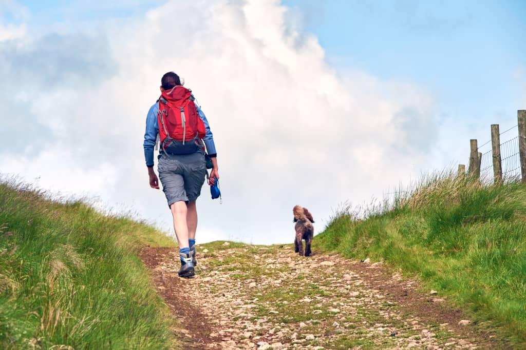 Dog Off-Leash Hiking