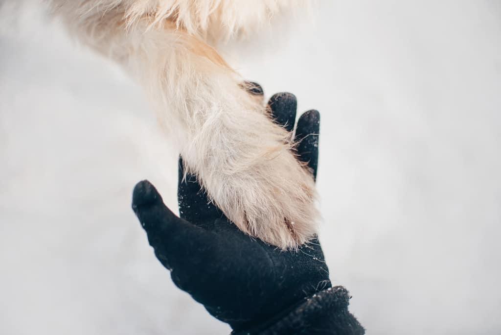 Dog Paw Inspection
