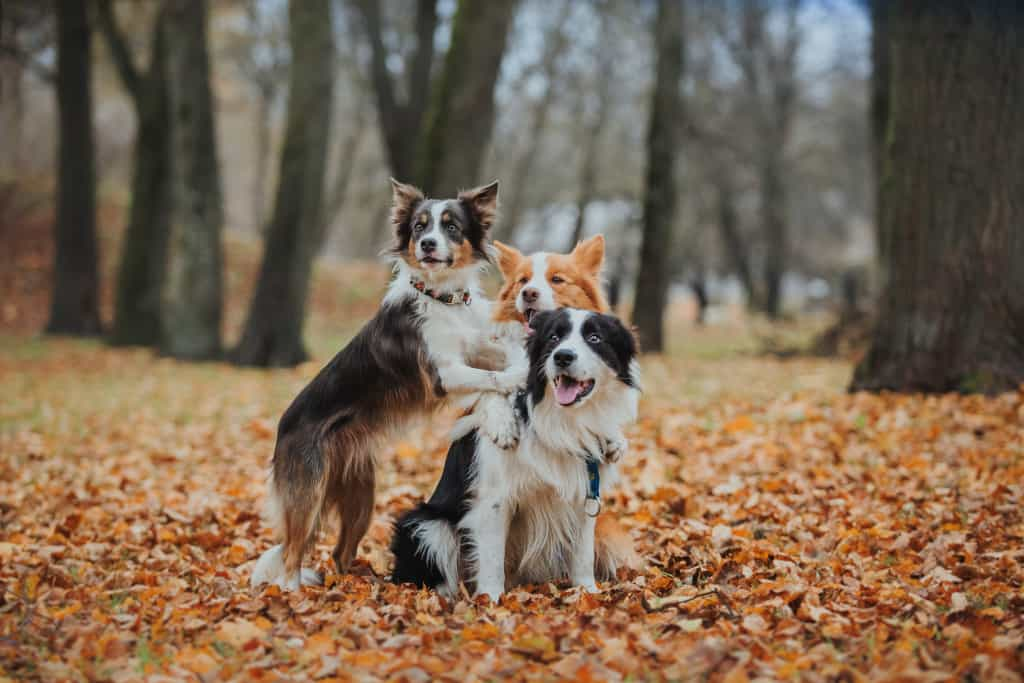 Dog Socialization in a Park