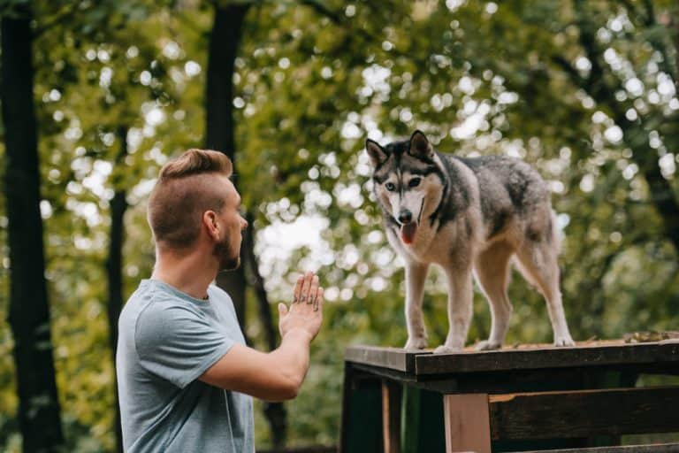 Dog Training for Hiking - Stay and Wait