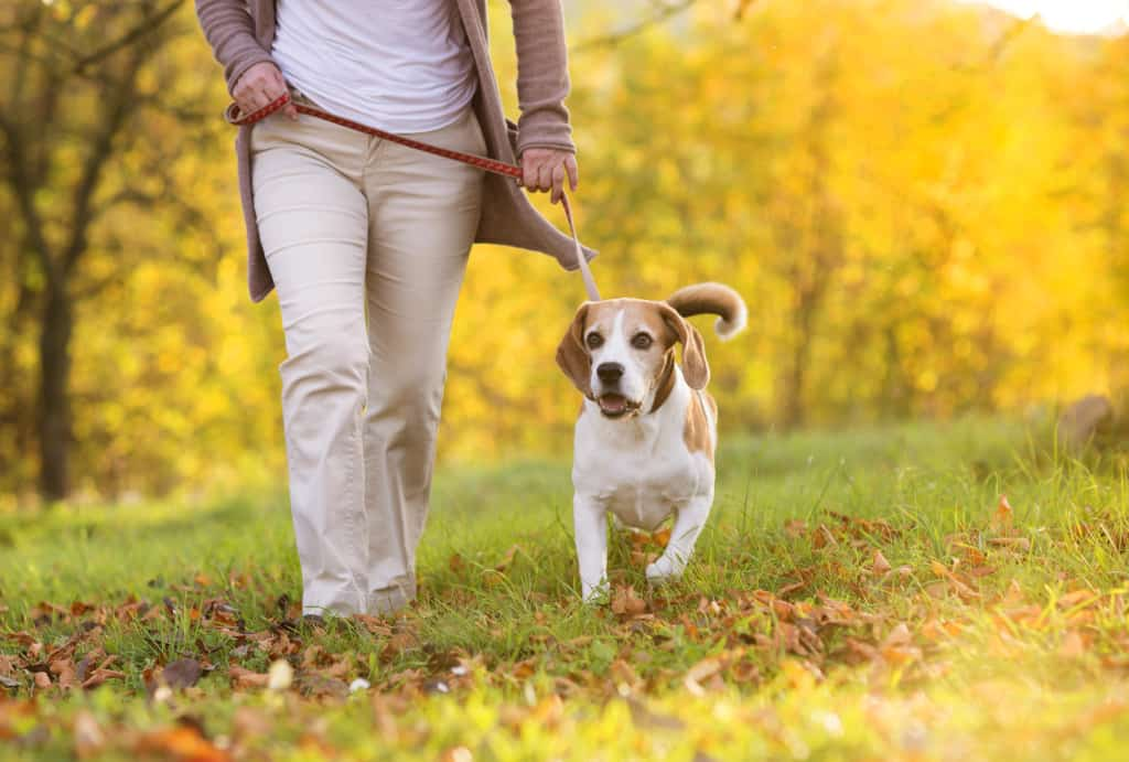 How Long Should I Walk My Dog