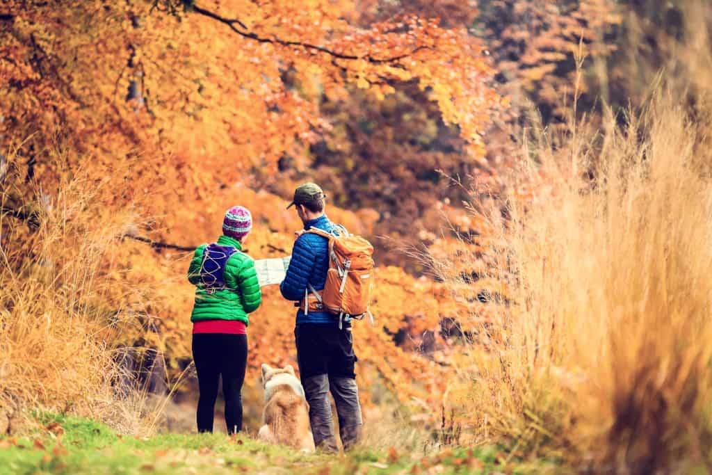 Pros Cons Dog Hiking Off-Leash