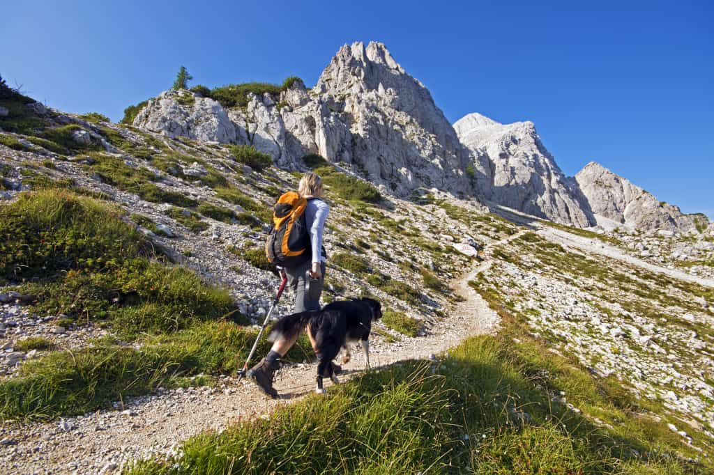 Pros Cons Off-Leash Hiking