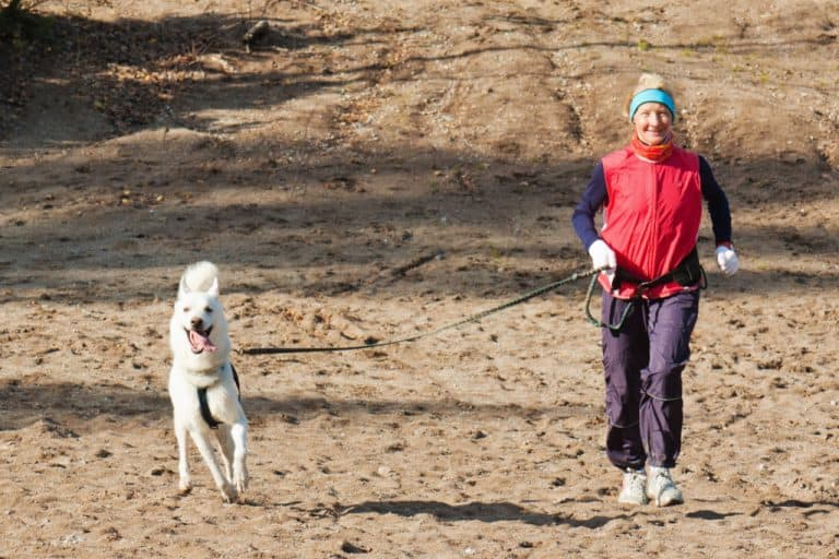 Run With a Dog That Pulls