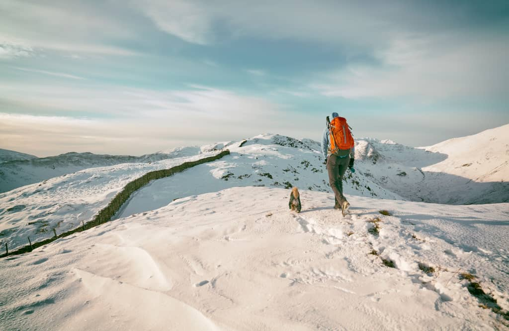 Safety Tips for Snowshoeing with Dogs