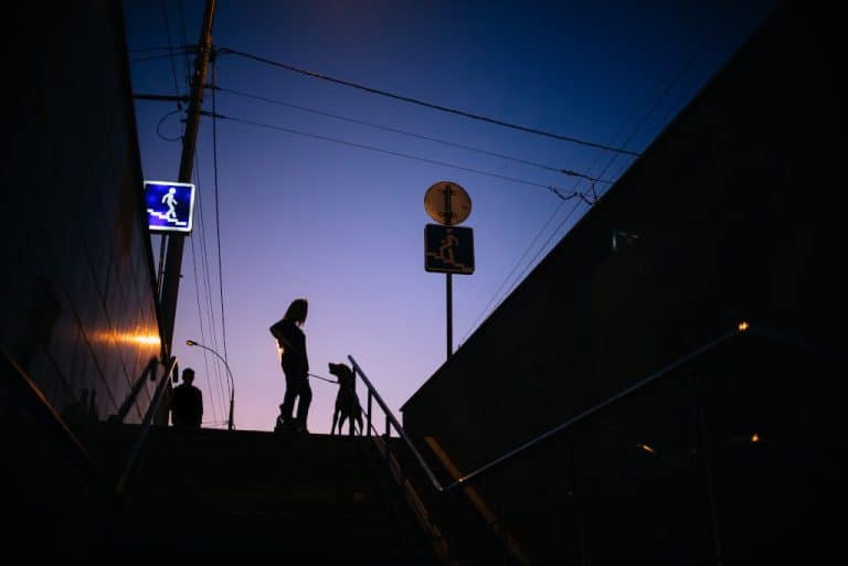 Safety Tips for Walking Your Dog At Night