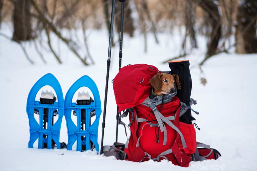 Snowshoeing Carrier Backpack